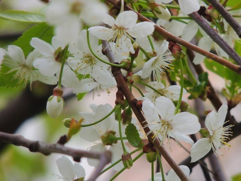 Фотографии цветов и деревьев - Страница 15 Dscn6616