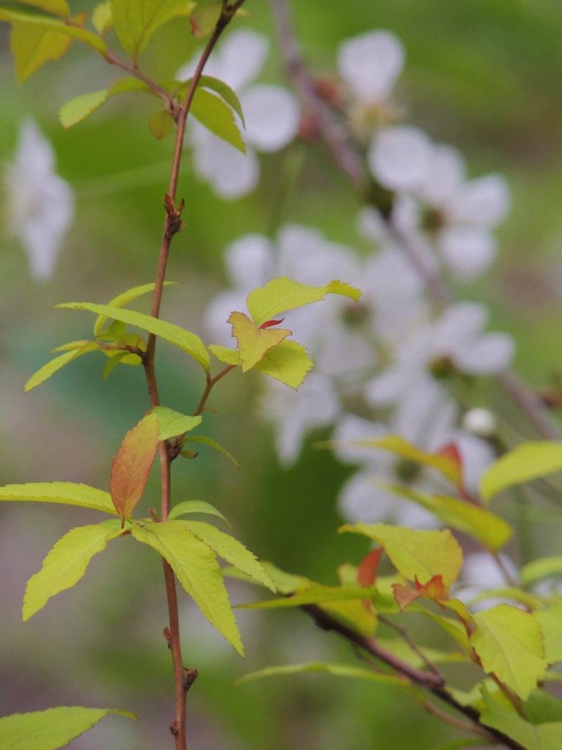 Фотографии цветов и деревьев - Страница 15 Dscn6617