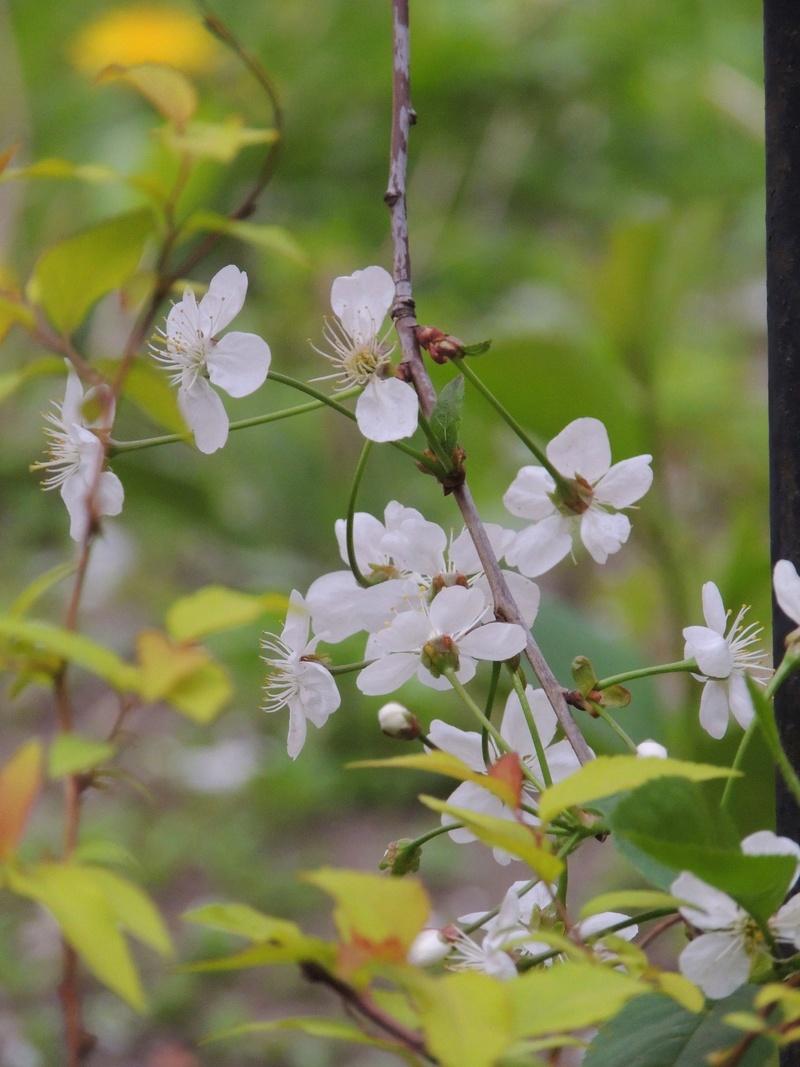 Фотографии цветов и деревьев - Страница 15 Dscn6618