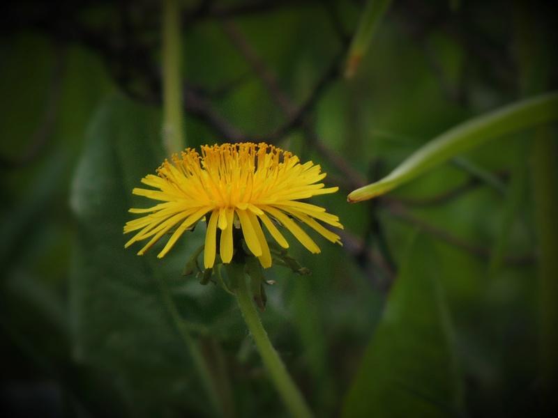 Фотографии цветов и деревьев - Страница 15 Dscn6619