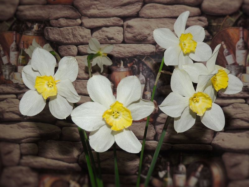 Фотографии цветов и деревьев - Страница 15 Dscn6723