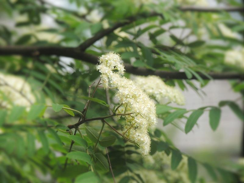 Фотографии цветов и деревьев - Страница 15 Dscn6726