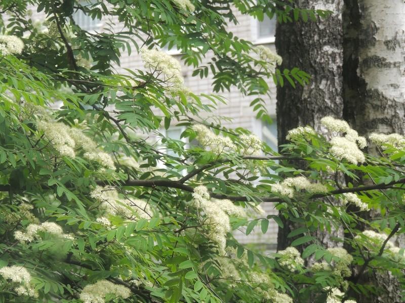 Фотографии цветов и деревьев - Страница 15 Dscn6727