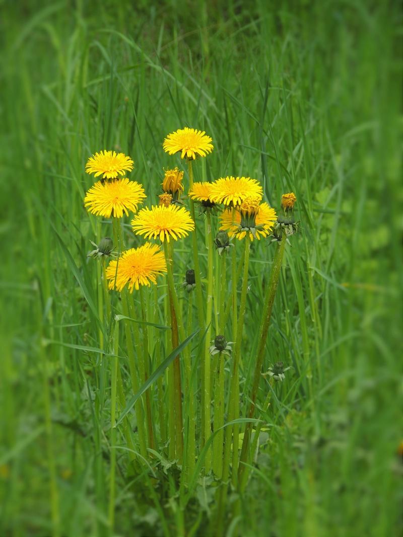 Фотографии цветов и деревьев - Страница 15 Dscn6817