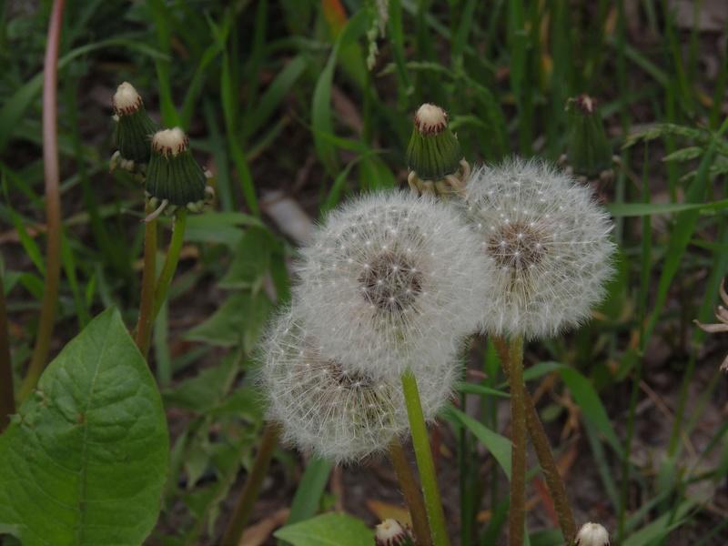 Фотографии цветов и деревьев - Страница 15 Dscn6818