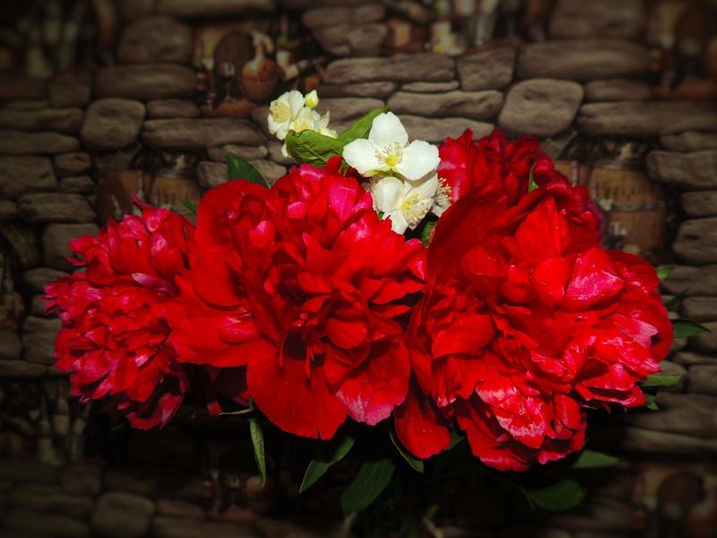 Фотографии цветов и деревьев - Страница 15 Dscn7142