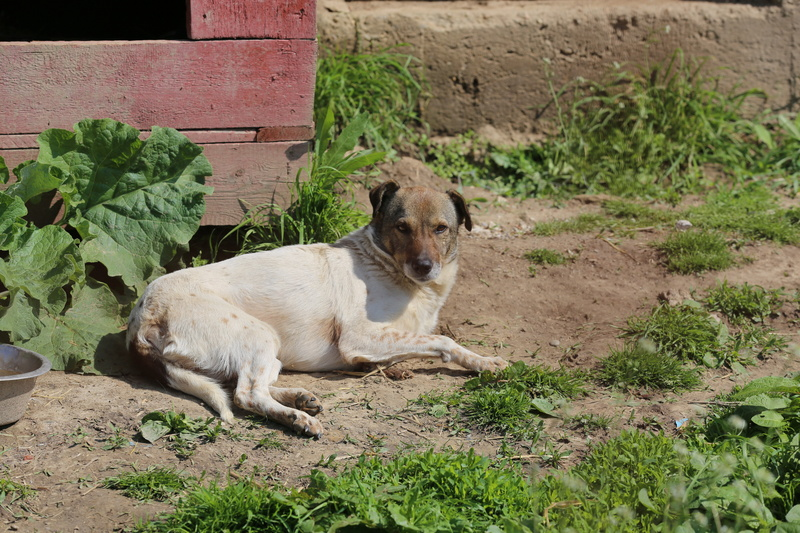 Alba, chienne magnifique, née en 2012 Hx9a4812