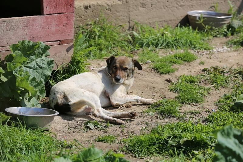 Alba, chienne magnifique, née en 2012 Hx9a4813