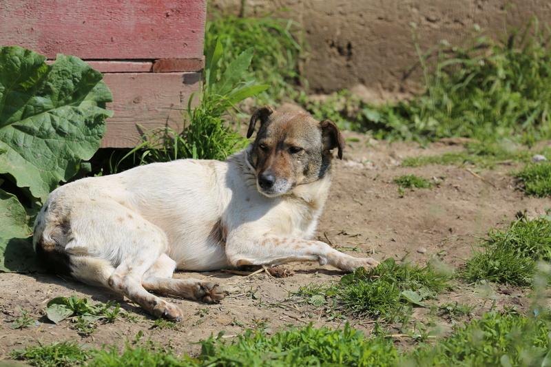 Alba, chienne magnifique, née en 2012 Hx9a4814