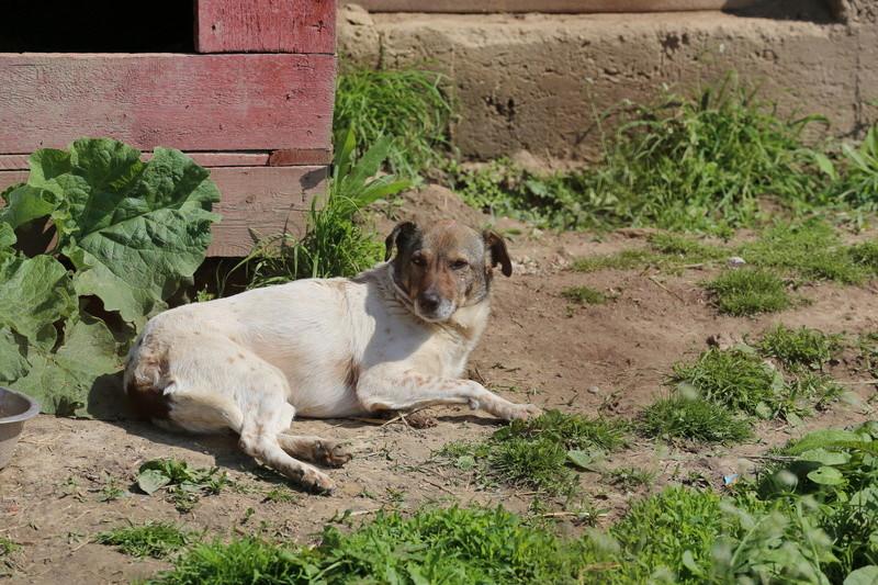 Alba, chienne magnifique, née en 2012 Hx9a4815