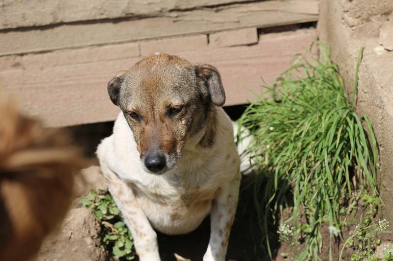 Alba, chienne magnifique, née en 2012 Hx9a4916