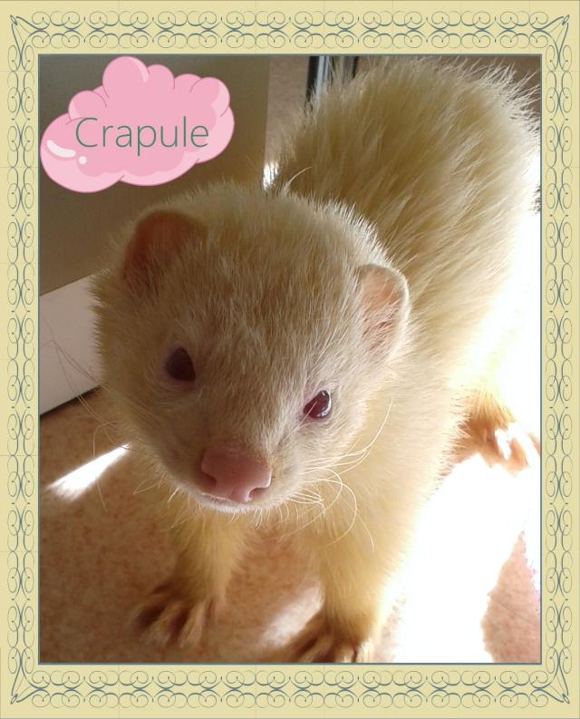 """[Décédé] Crapule (dit """"p'tit doudou""""), mâle albinos Montag10"""
