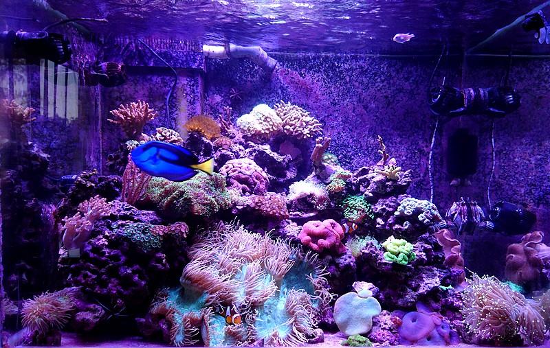 les 500 litres d'eau de mer d'angy et ced  - Page 2 Dsc_1211