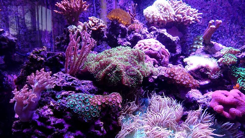 les 500 litres d'eau de mer d'angy et ced  - Page 2 Dsc_1213