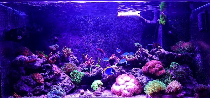 les 500 litres d'eau de mer d'angy et ced  - Page 2 Dsc_1218
