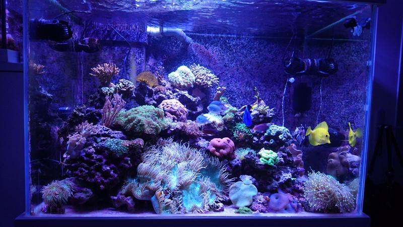 les 500 litres d'eau de mer d'angy et ced  - Page 2 Dsc_1241