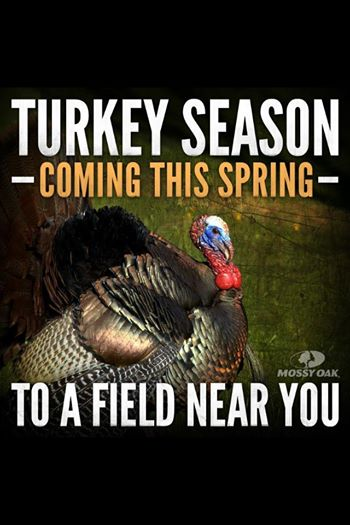 Who is all going to be hunting turkeys ??  17799110