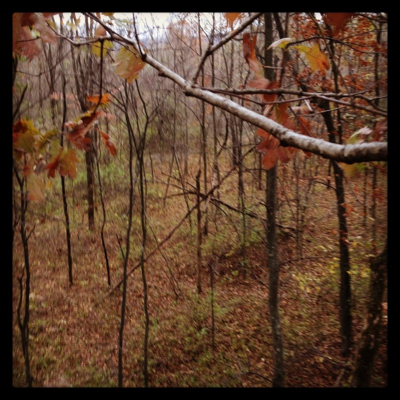 View from your favorite tree stands Fav_st10