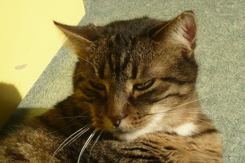 THEMIS, née en janvier 2010 - Page 5 P1080824