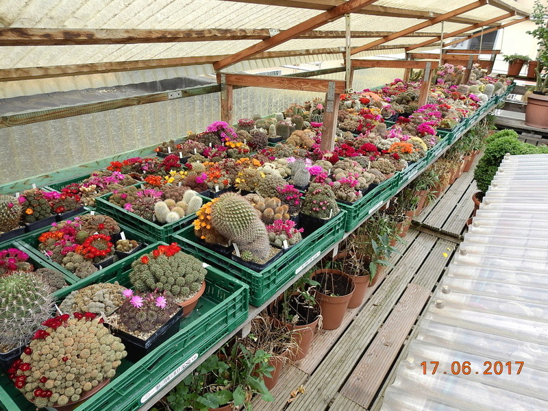Cacti and Sukkulent in Köln, every day new flowers in the greenhouse Part 165 Bild1081