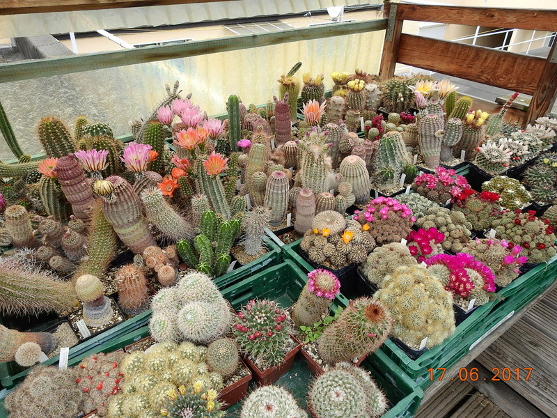 Cacti and Sukkulent in Köln, every day new flowers in the greenhouse Part 165 Bild1082