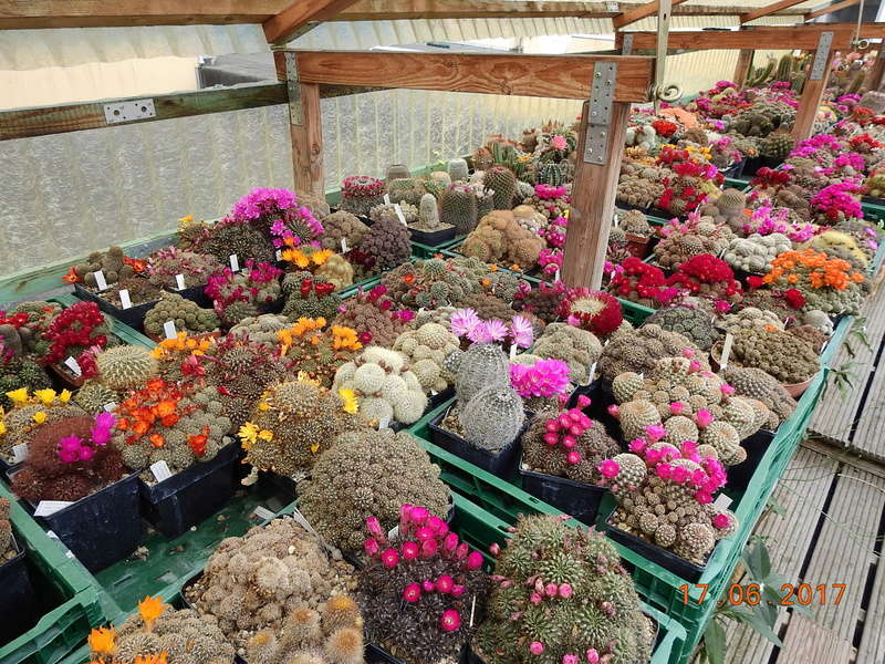 Cacti and Sukkulent in Köln, every day new flowers in the greenhouse Part 165 Bild1084