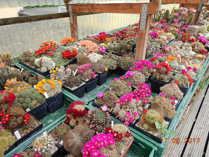 Cacti and Sukkulent in Köln, every day new flowers in the greenhouse Part 165 Bild1086