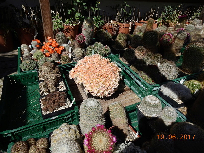 Cacti and Sukkulent in Köln, every day new flowers in the greenhouse Part 165 Bild1091