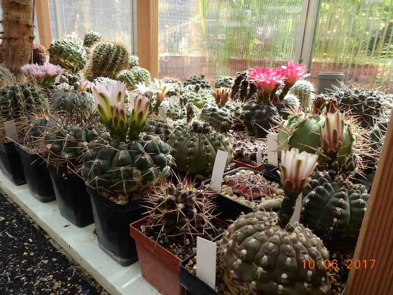 Cacti and Sukkulent in Köln, every day new flowers in the greenhouse Part 165 Bild1114