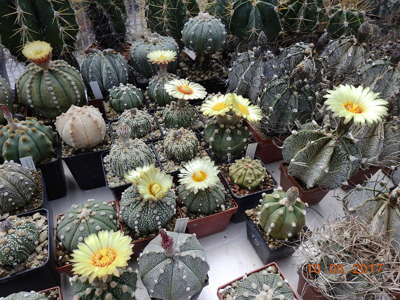Cacti and Sukkulent in Köln, every day new flowers in the greenhouse Part 165 Bild1121
