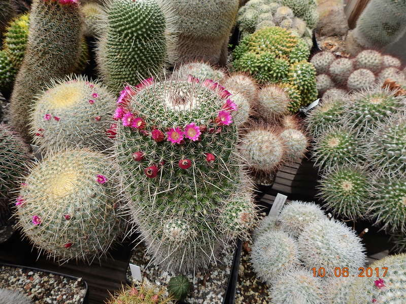 Cacti and Sukkulent in Köln, every day new flowers in the greenhouse Part 166 Bild1129