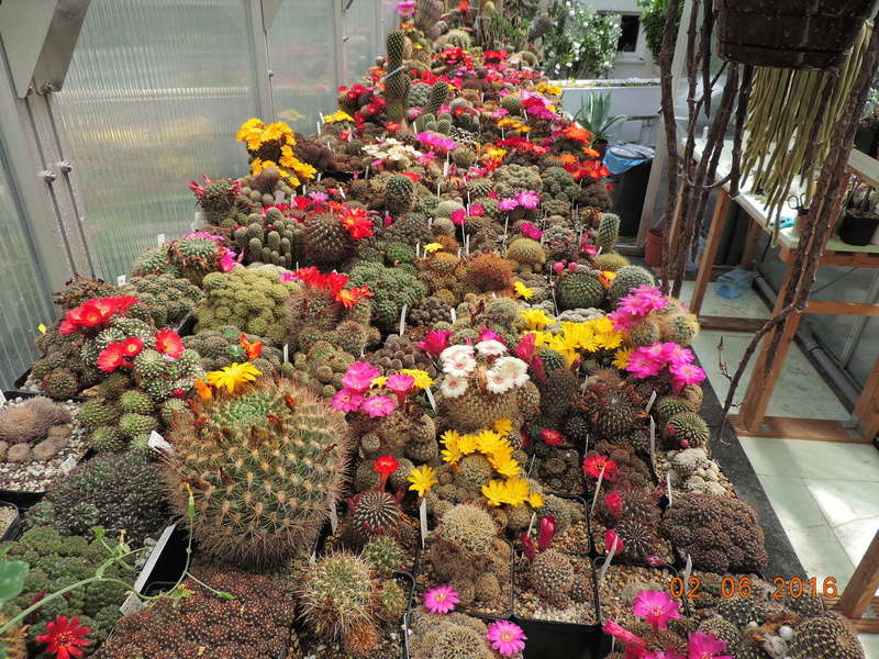 Cacti and Sukkulent in Köln, every day new flowers in the greenhouse Part 158 Bild_142