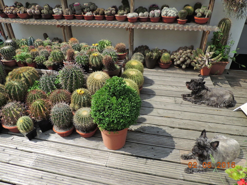 Cacti and Sukkulent in Köln, every day new flowers in the greenhouse Part 158 Bild_144