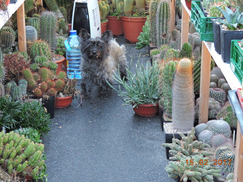 Cacti and Sukkulent in Köln, every day new flowers in the greenhouse Part 158 Bild_165