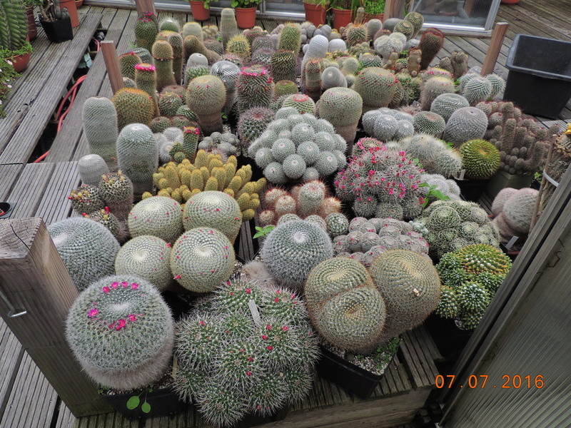 Cacti and Sukkulent in Köln, every day new flowers in the greenhouse Part 160 Bild_407