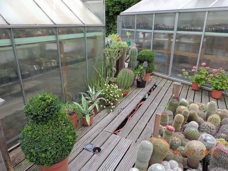 Cacti and Sukkulent in Köln, every day new flowers in the greenhouse Part 160 Bild_408