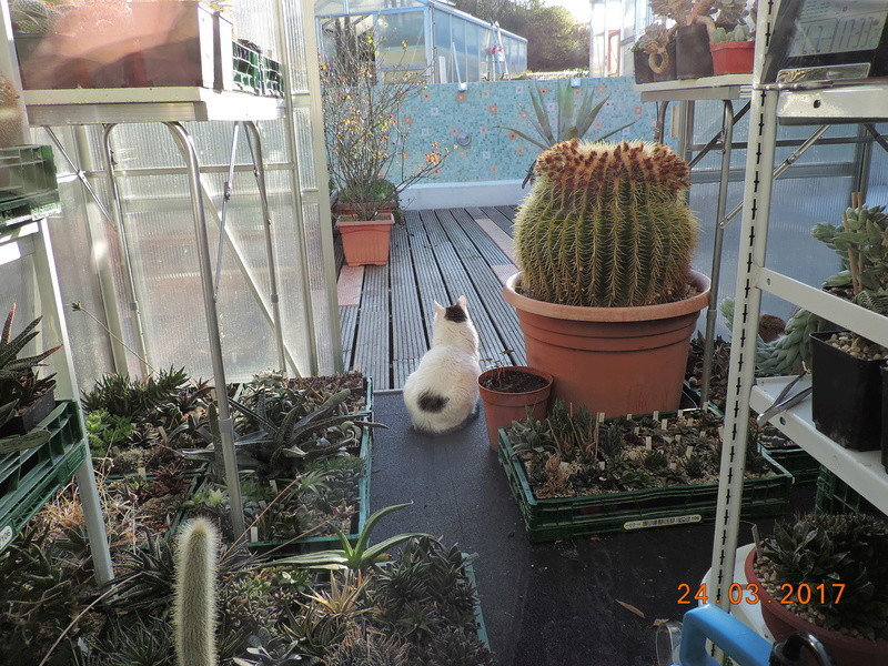 Cacti and Sukkulent in Köln, every day new flowers in the greenhouse Part 160 Bild_441