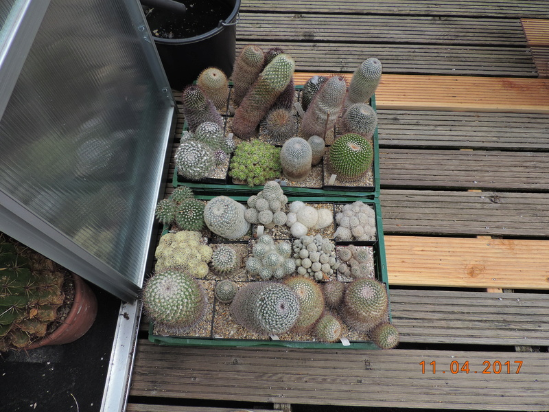 Cacti and Sukkulent in Köln, every day new flowers in the greenhouse Part 160 Bild_494