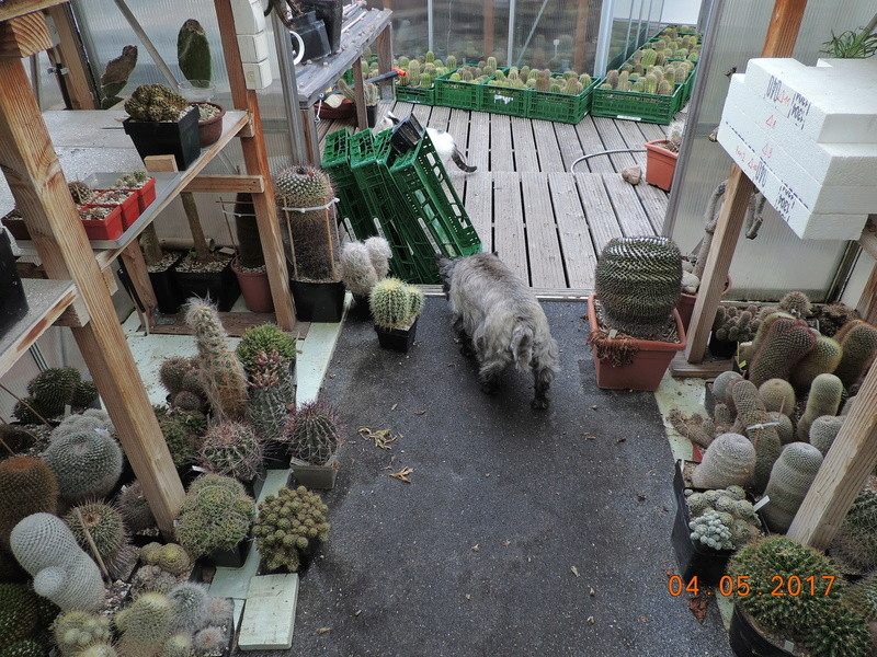 Cacti and Sukkulent in Köln, every day new flowers in the greenhouse Part 161 Bild_569