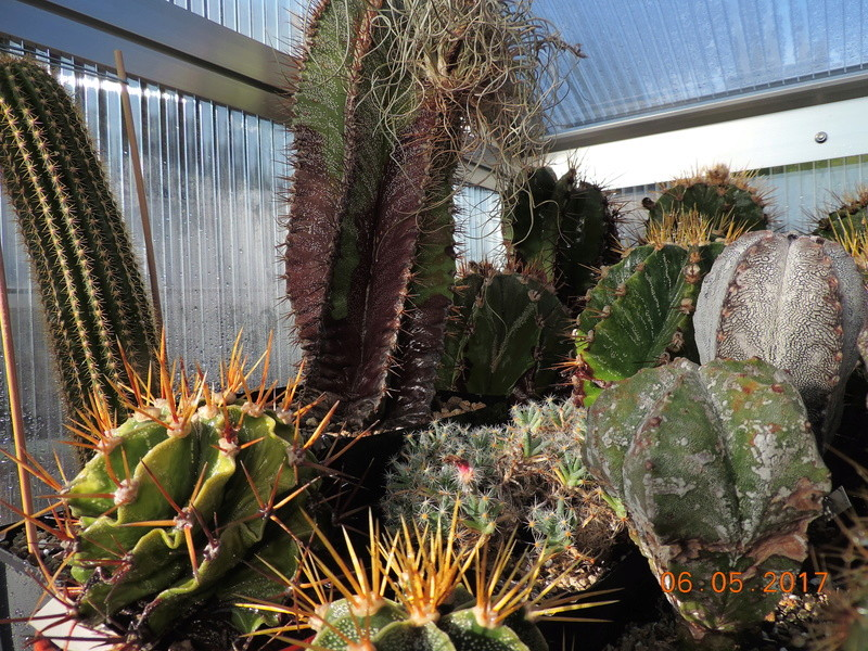 Cacti and Sukkulent in Köln, every day new flowers in the greenhouse Part 161 Bild_591