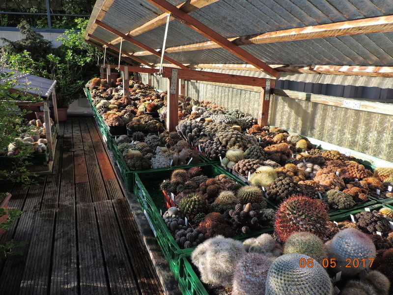 Cacti and Sukkulent in Köln, every day new flowers in the greenhouse Part 161 Bild_604