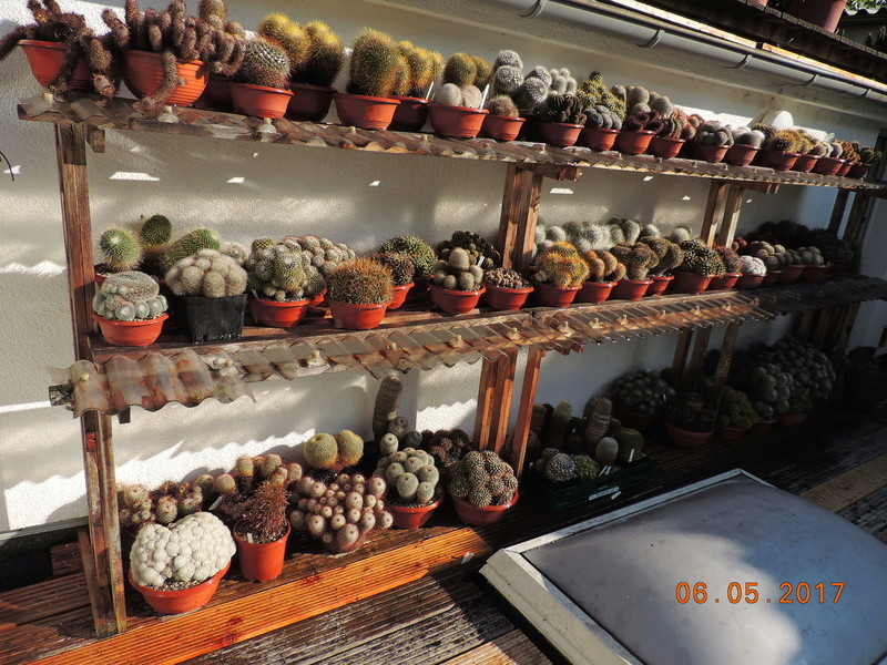Cacti and Sukkulent in Köln, every day new flowers in the greenhouse Part 161 Bild_606