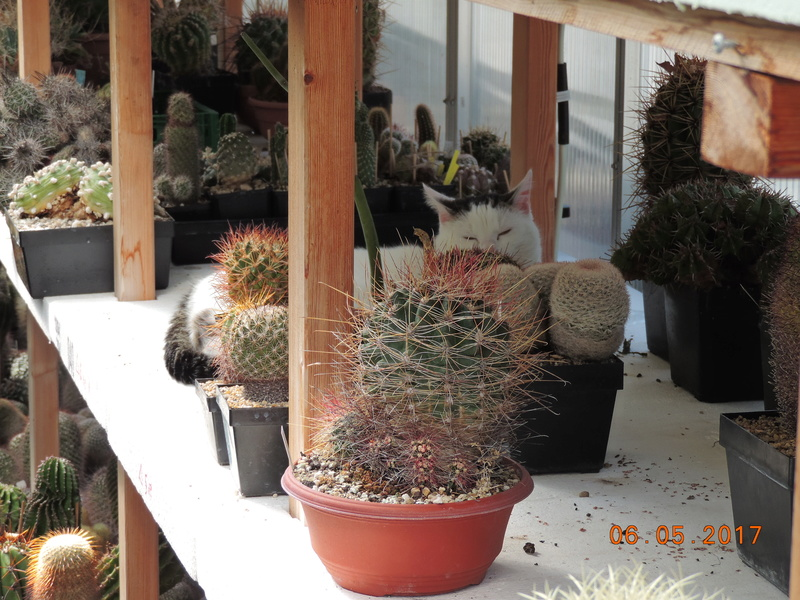 Cacti and Sukkulent in Köln, every day new flowers in the greenhouse Part 161 Bild_615
