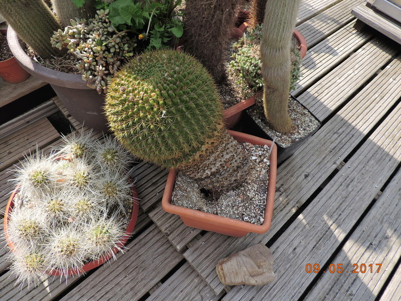 Cacti and Sukkulent in Köln, every day new flowers in the greenhouse Part 162 Bild_620