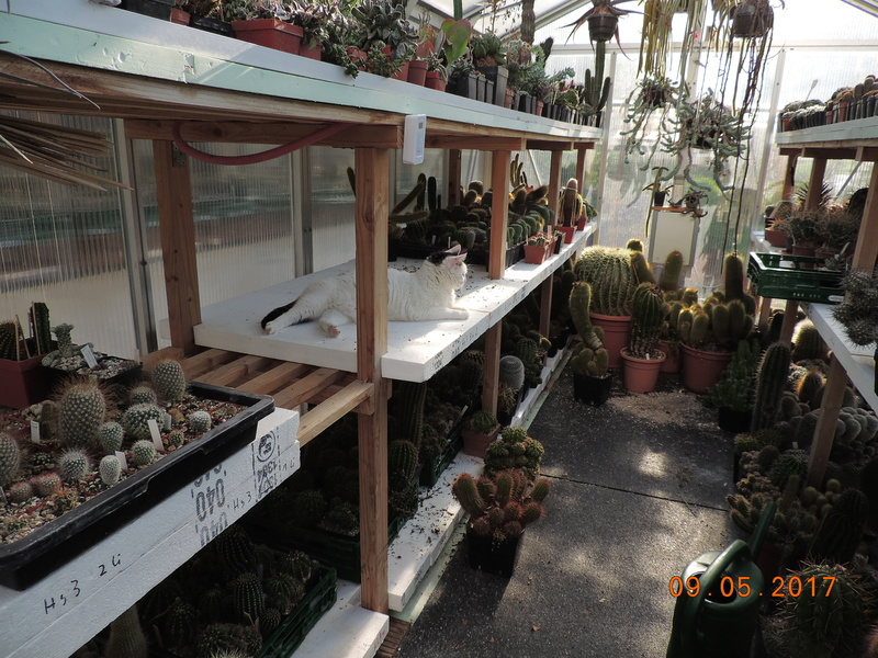 Cacti and Sukkulent in Köln, every day new flowers in the greenhouse Part 162 Bild_639