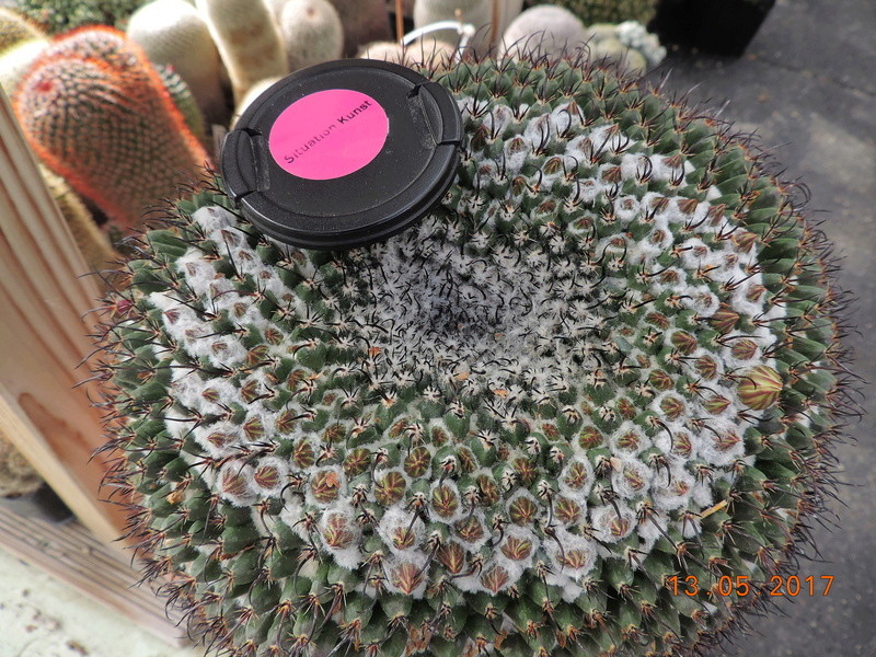 Cacti and Sukkulent in Köln, every day new flowers in the greenhouse Part 162 Bild_676