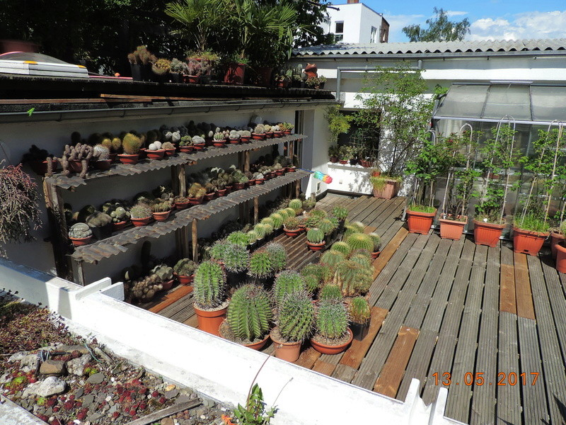 Cacti and Sukkulent in Köln, every day new flowers in the greenhouse Part 162 Bild_686