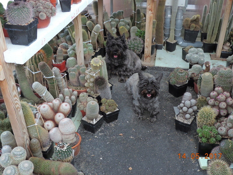 Cacti and Sukkulent in Köln, every day new flowers in the greenhouse Part 162 Bild_698