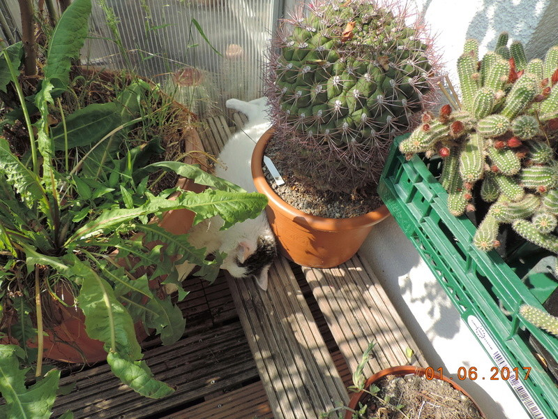 Cacti and Sukkulent in Köln, every day new flowers in the greenhouse Part 164 Bild_896