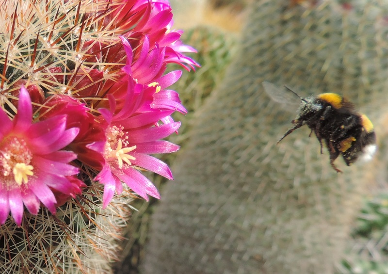 Cacti and Sukkulent in Köln, every day new flowers in the greenhouse Part 164 Bild_898